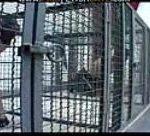 Cage Femdom COMPLETA